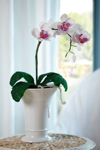afrikanische weissbauchigel zucht perlenblumen zart elegant. Black Bedroom Furniture Sets. Home Design Ideas
