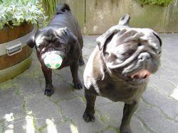 Anne würde ja gerne noch weiterspielen. Ich verzichte jetzt mal lieber auf den Ball!