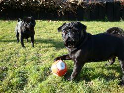 Mach schnell ein Foto! Carlos kommt und will den Ball klauen.