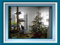 Ein Katzenbaum und ein Tannenbaum