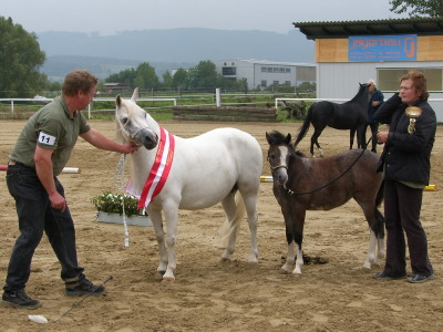 Die Siegerstute der Welsh-A-Ponys präsentiert sich den Zuschauern.