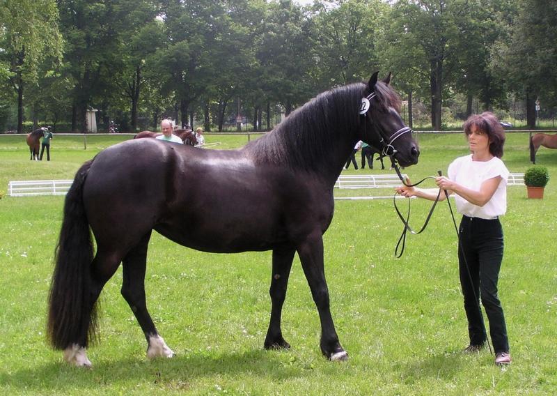 Staatsprämienstute Lucinda Magic Pearl, Reservesieger der Landesschau 2005, Züchter und Besitzer Ursula Wolfgruber