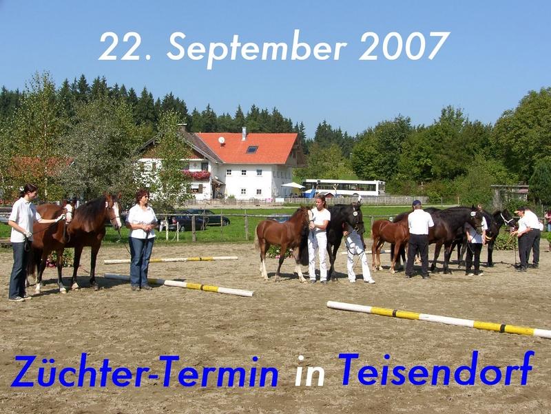 Alpenländisches Welsh-Championat auf dem Gestüt Meisterhof der Familie Nutz in Teisendorf