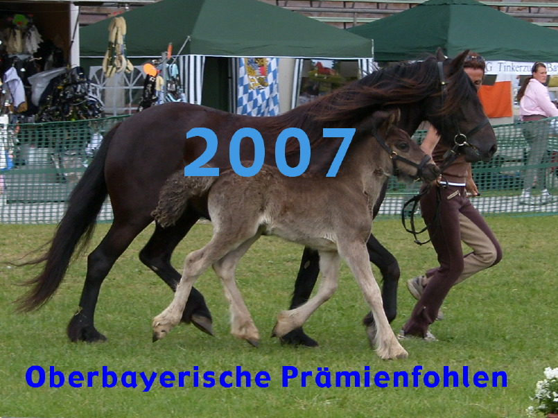 Die Prämienfohlen 2007 des oberbayerischen Ponyzuchtverbandes