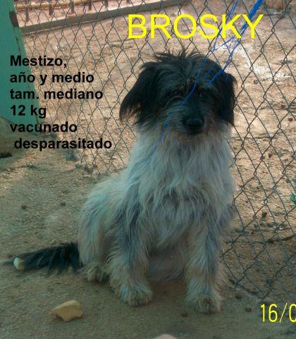 BROSKY...EN ACOGIDA en ARCA JAEN, gracias a Maria del Mar y Vicen