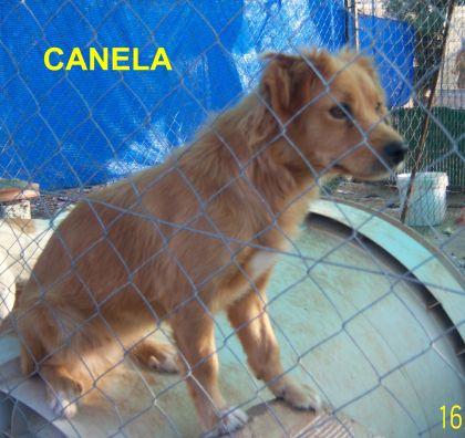 CANELA..ESTÁ EN ALEMANIA, gracias a Rosa y Mariana de ABYDAJAEN
