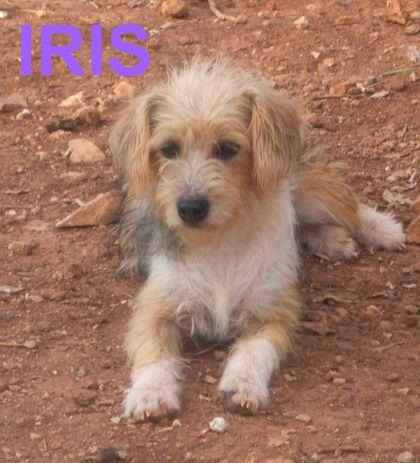 IRIS...que al final resultó ser LUNA...EN ACOGIDA GRACIAS A ARCA JAEN. Gracias a Maria del Mar y Vicen