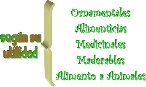 Proyecto los seres vivos las plantas for Plantas medicinales y ornamentales