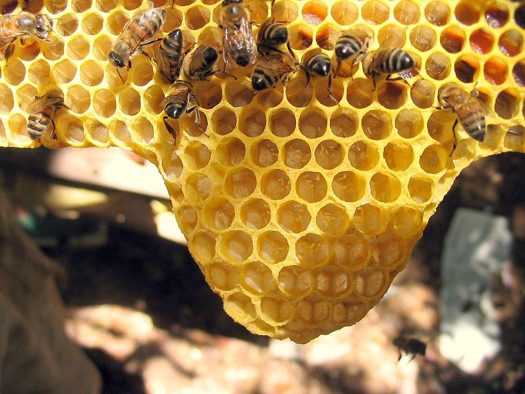 La mejor miel de abeja en guatemala
