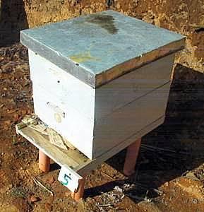 venta de cajas para abejas