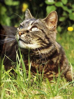 świat Kotów