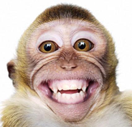 maymun komik resim
