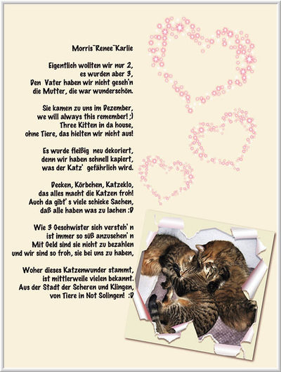 Image Result For Zitate Hund Katze