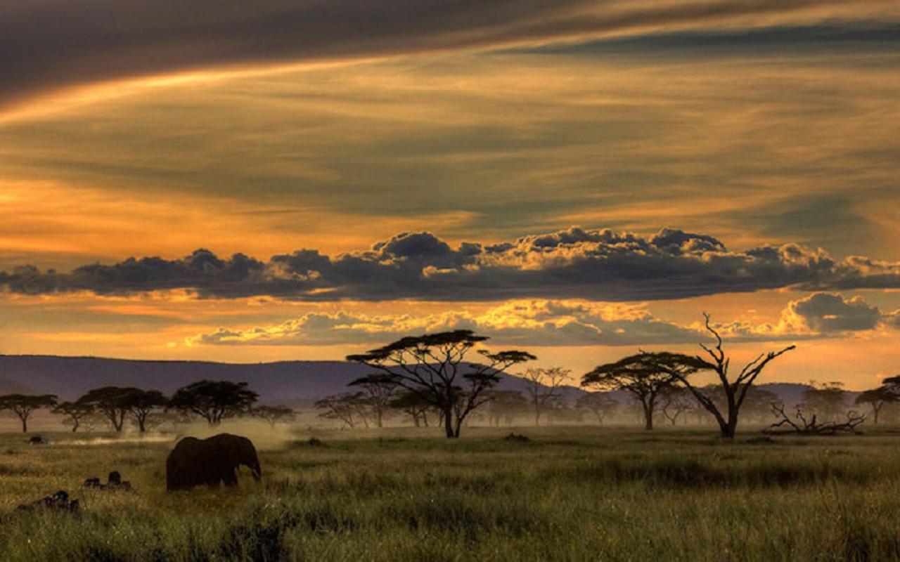african animal skins