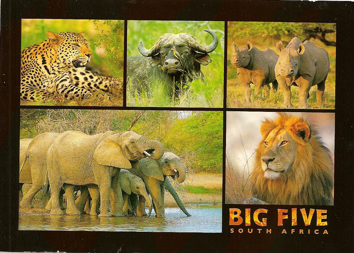 the big five It is conceptually framed around the five-factor model of personality  judge et al (2002) assessed the links between the big five and leadership on the basis of.