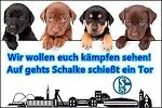 Hunde wollen Schalke kämpfen sehen