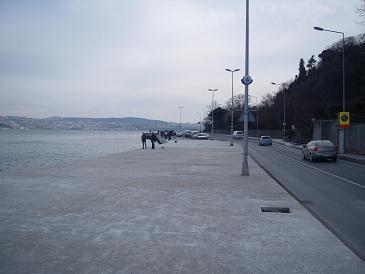 19.02.2009