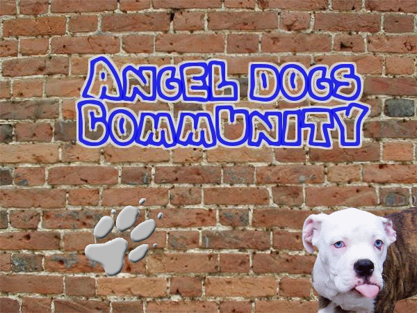 Angel-Dogs-Community