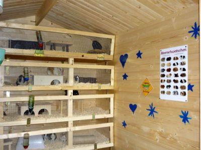 meerschweinchenarchitekt. Black Bedroom Furniture Sets. Home Design Ideas