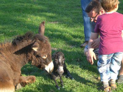 Rosalie mit dem kleinen Anton, 5 Minuten nach der Geburt