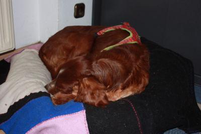 Bettwäsche Bettwaren, -wäsche & Matratzen Trendmarkierung Neu!! Iris Setter Bettwäsche