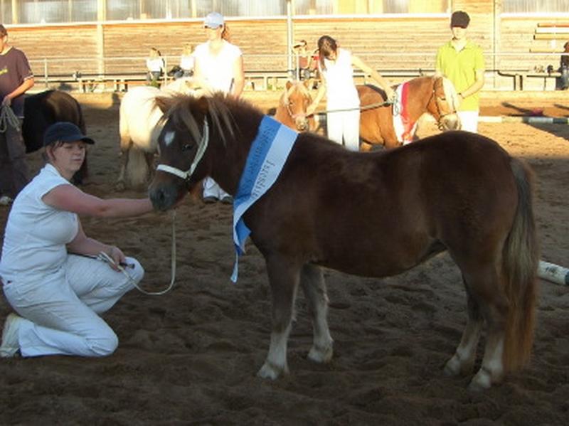 Tagessieger der zweijährigen Ponys wurde die Orginalstute Loni von Georg a.d. Lucy Ann von Jupiter, Züchter und Besitzer Familie Schaubmair, Gerbishofen.