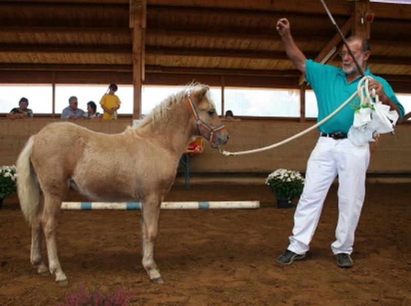 Mit einem Ia-Preis prmiert wurde das Stutfohlen Hafis von Werner Firsching Grettstadt Siegerfohlen bei den Classic Ponys.