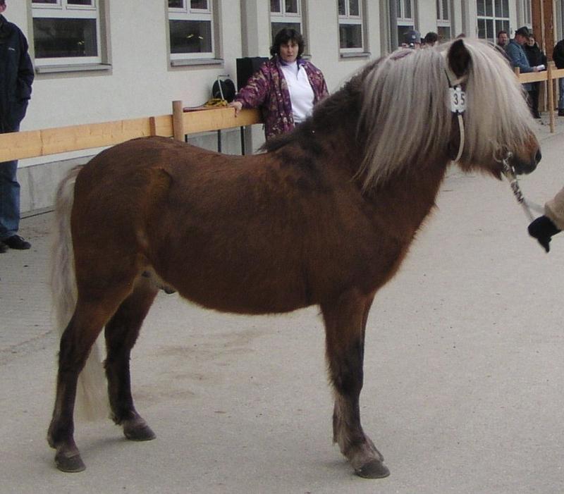 Partbred-Hengst Balco, Besitzerin Rosemarie Kellermann