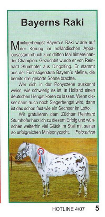 Der Tigerhengst Bayerns Raki. gezogen im Mini-Gestüt Bayern von Reinhard Stumhofer wurde im Jahre 2007 zum 3. Mal hintereinander Champion bei den Mini-Appaloosa in den Niederlanden.