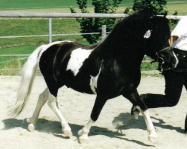Holsteins Bonavista, Besitzer Erika und Lorenz Roßkopf