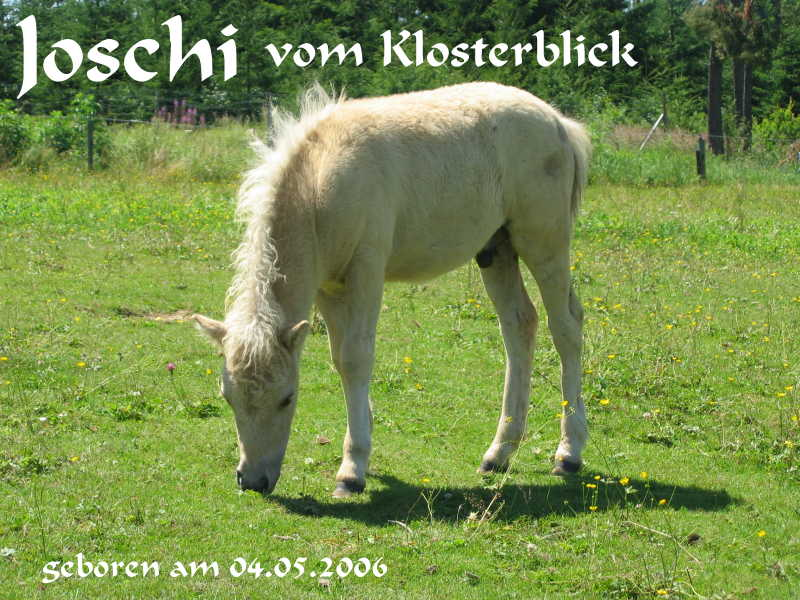Joschi vom Klosterblick, Züchter und Besitzer Josef Kaufmann