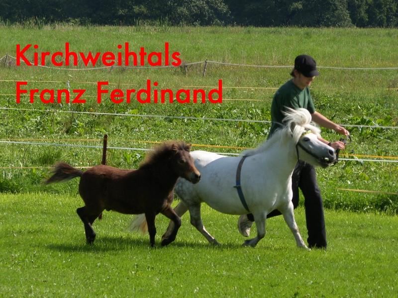 Kirchweihtals Franz Ferdinand, Auktionsfohlen für Babenhausen
