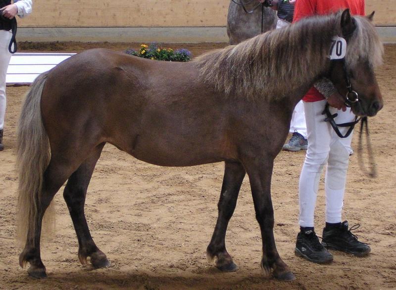 Sieger Classic-Ponys Samantha, Besitzer Artur Nieberle, Kaufbeuren