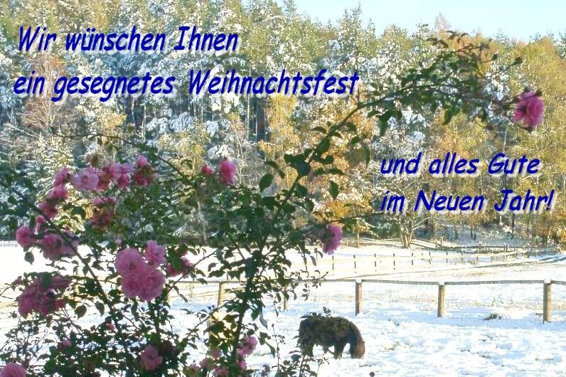Winterimpressionen vom Gestüt Buchberg von Bettina Bauer und Xaver Buchberg in Gangkofen.