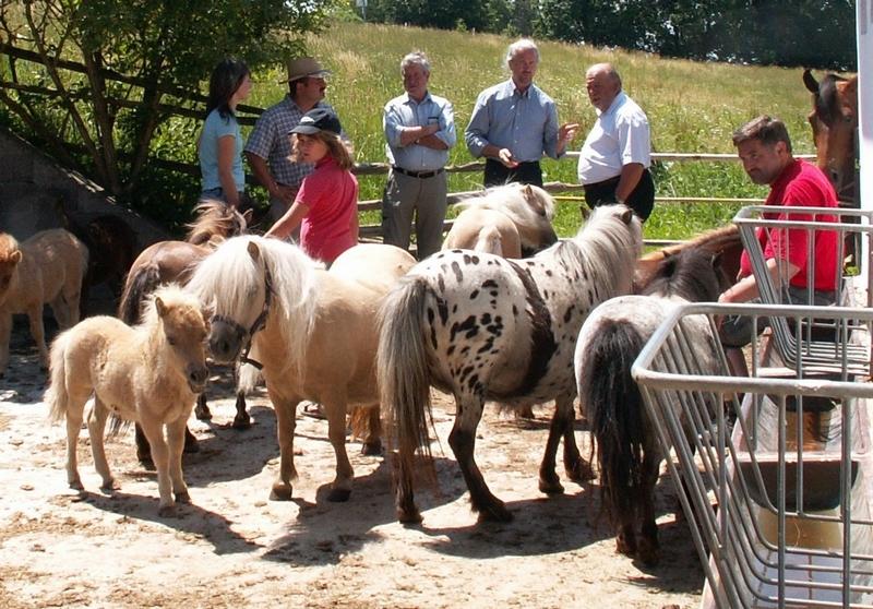 Gestütsbesitzer Reinhard Stumhofer (i.d.M.) zeigt den Gästen aus Schwaben seine Mini-Shetty-Herde