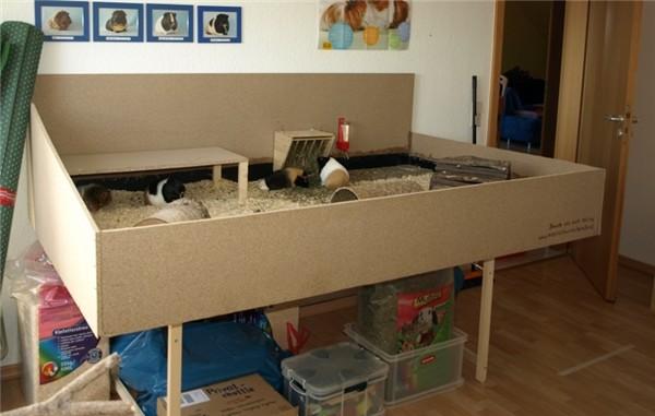 die etwas andere meerschweinchenseite echo. Black Bedroom Furniture Sets. Home Design Ideas