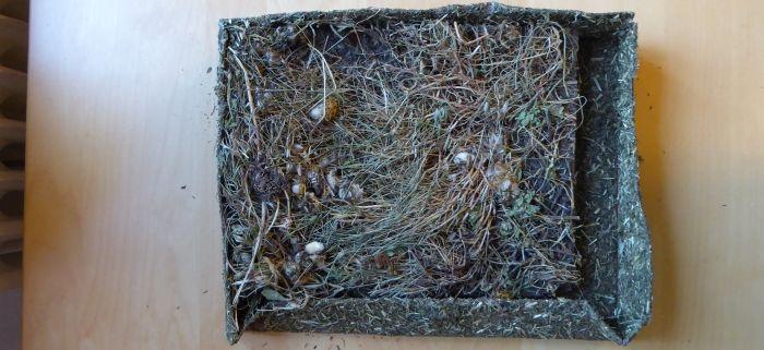 ausgepackte Kräuterwiese mit Löwenzahn
