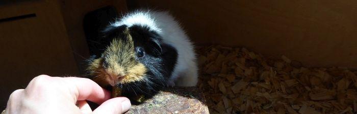 Flummi testet beaphar Natur Meerschweinchen Pellets