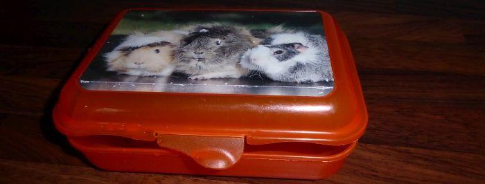 Meerschweinchen-Brotdose