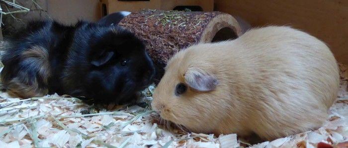 Fidelio Meerschweinchenfutter getreidefrei im Ötti-Test