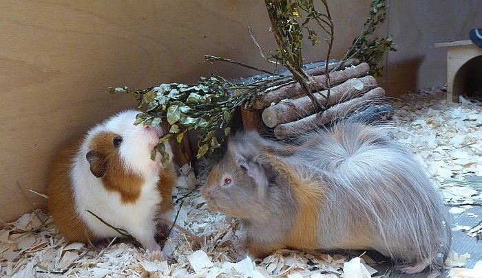 Eddie und Yuni testen Heidelbeerbuschzweige