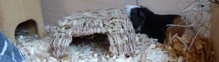 Muffi mampft die Heukoje