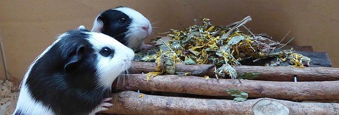 Kaninchens Allerlei Spezial in der Verkostung