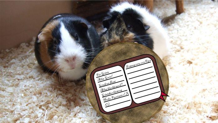 Muffi und Flummi lesen das Logbuch auf einer Baumscheibe