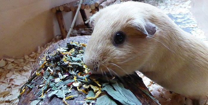 Schweinedame Ilani verkostet Meeris-Allerlei