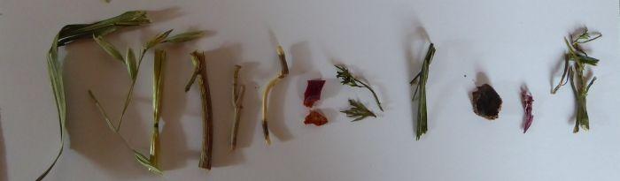 Kräuter-Mix mit Paprika unterm Mikroskop
