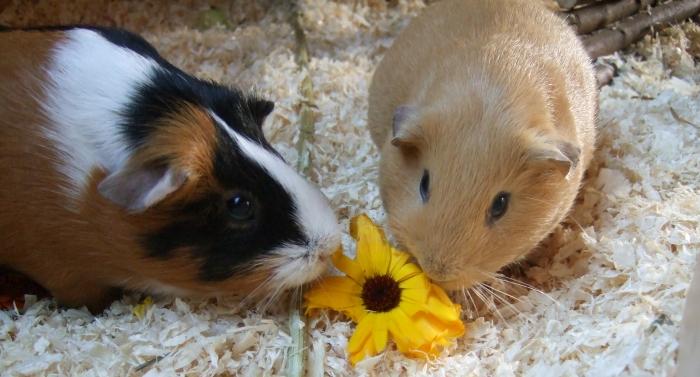 Freier Pron-Hamster