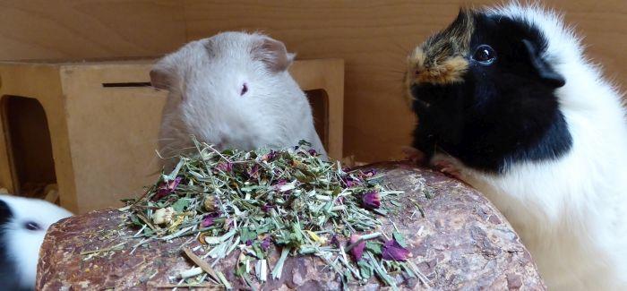 Die Öttis testen den Blütenmix mit Timothy-Heu