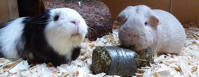 Vital-Blocks Magen im Schweinetest