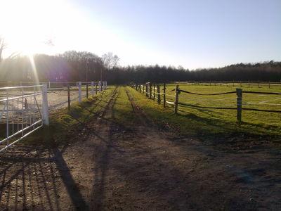 Weg zum Hardterwald und Weide